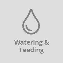 Watering & Feeding